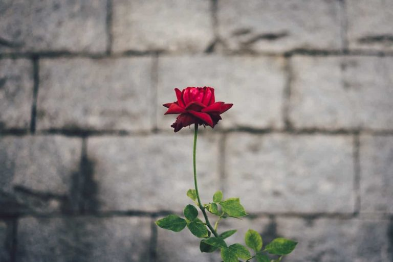 13 Things You Can Do to Build Emotional Resilience
